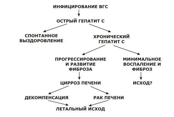 схема развития гепатита C