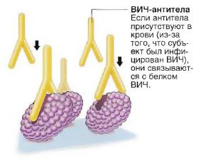 Скачать кански патология глазного дна