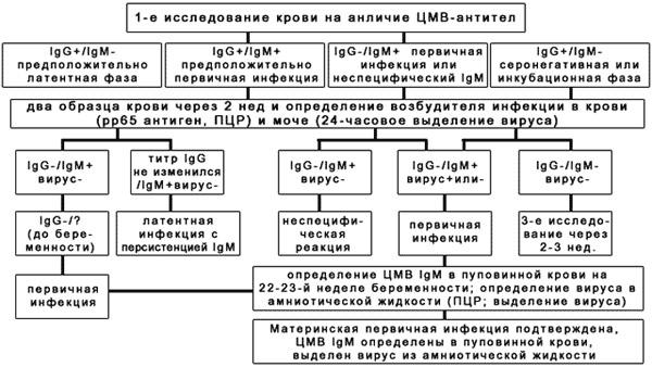 Алгоритм ИФА-исследований при подозрении на ЦМВ